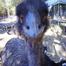 emu view