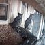 Rusty and Iris the Great Horned Owls
