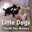 Des Moines Doggycam #2