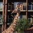 Disney's Animal Kingdom Lodge - June 2009