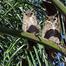 Owl Gang