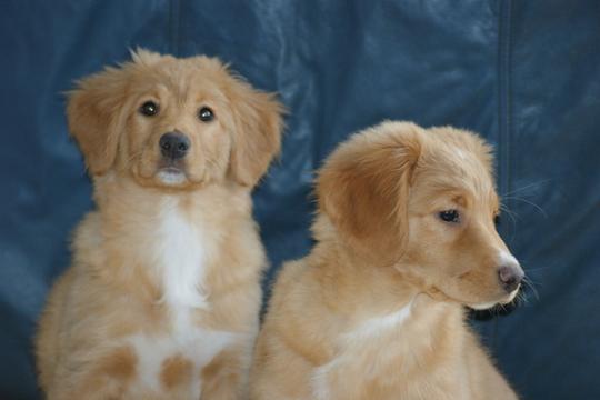 Salty Dog Kennels Puppy Cam
