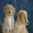 Saltydog Kennels Puppy Cam