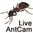 Live Ant Cam
