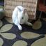 Bunny Rabbit by BinkyBunny.com