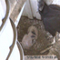 Black Vulture Nest Cam
