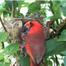 Orlando Cardinal Cam