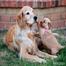 Greta's Puppy Cam