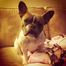 Mia The Puppia's Puppy Cam