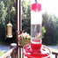 Hummingbird Feeder in NC