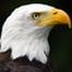 Hancock Delta Eagles