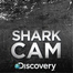 Explore the deep with Discovery's Shark Cam