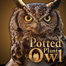 Introducing Africam&#039;s Potted Plant Owl!