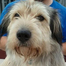 North Shore Animal League America March 8, 2012 7:00 PM
