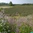 Wetlands Cam