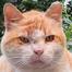 Bushwick Kittens
