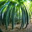 bamboo.tv