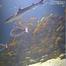 Northsea underwater Live Cam in Denmark
