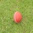 Like Cricket