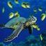 South Topsail Sea Turtles