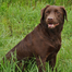 OwascoValleyRetrievers 10 pups 4/30/2013