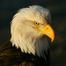 CCB Richmond Eagles