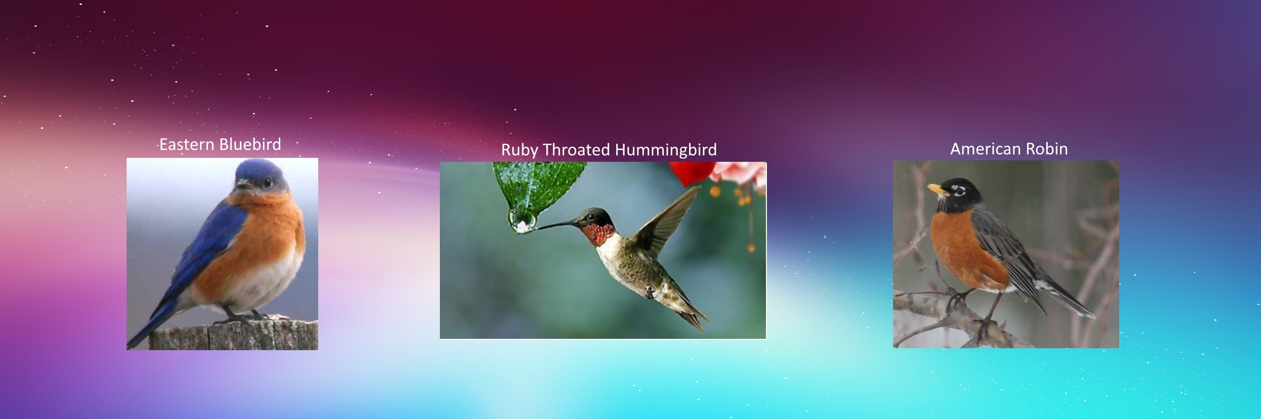 HUMMINGBIRD feeder webcam in SE Arkansas