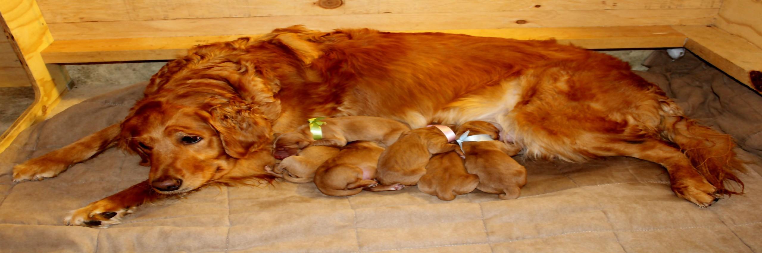 Golden Grahams' Diamond Dogs