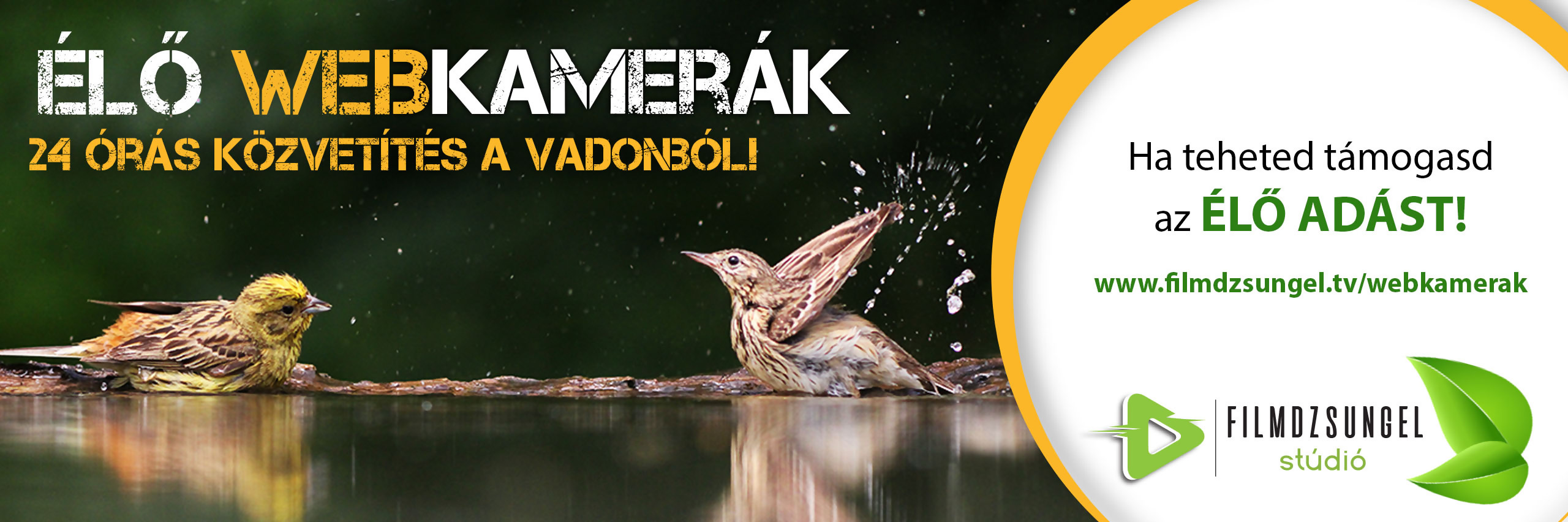Rétisas fészek a Duna-Dráva Nemzeti Parkban
