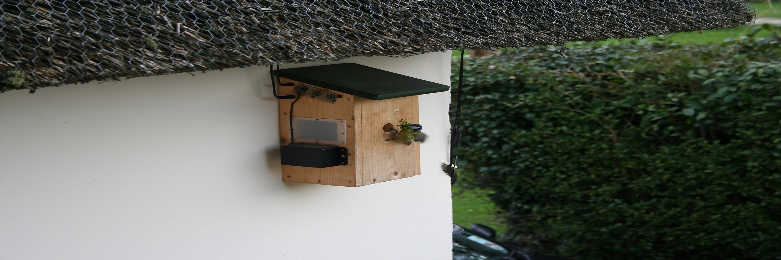 The Bluetit Nestbox 2017