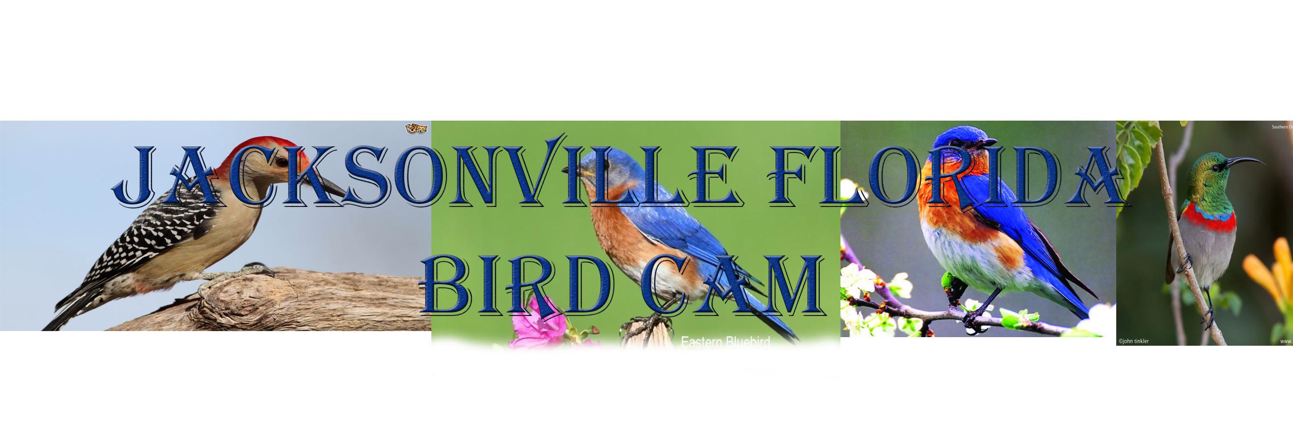 Jacksonville Florida Wild Bird Cam