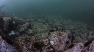 Underwater webcamera at Race Rocks, B.C.