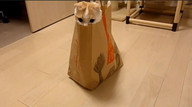 Cat&amp;#039;s out of the bag