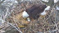 Watch  MN Eagle Cam in HD streaming