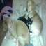 Bella's 6  Puppies