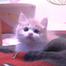 kittylover33