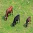 新団体With Cattle発足!
