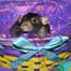 Baby Rat Cam
