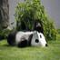 世界のパンダスライドショー