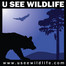 Upper Springs Live Cam - USeeWildllife