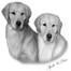 SunKissed Goldens - Apollo & Tiah Puppies