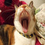 schiele_cat LIVE