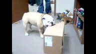Students Bring A Box for Blue to Destroy