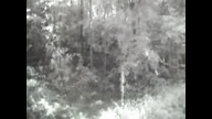 www.Live Bigfoot Cam.com - 8. 5. 2008. 13:35:23 GMT-0400