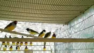 birds in aviary