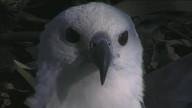 Sea-EagleCAM