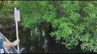Warbler nest boat ride. 5-8-17
