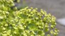 Ageless Gardens S1E2: Therapeutic Gardens