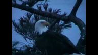 BRIeaglecam1: March 23 2001_1901