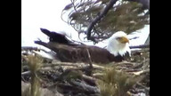 NextEra Maine Eaglecam1: March 25, 20111_1451